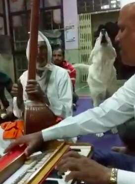 Dog who joins in temple chanting by howling