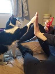 cat learns to high five