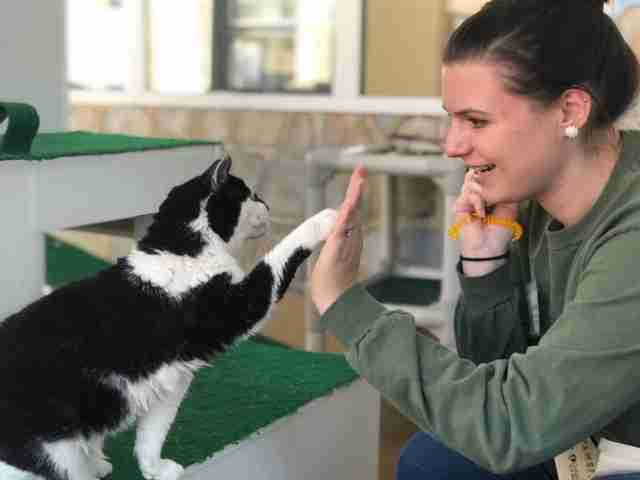 cat gives high fives