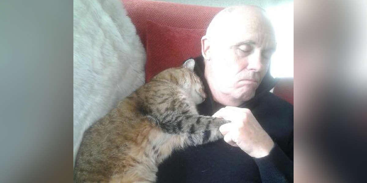Seorang Pria Merasa Pulih dari Operasi Setelah Berpelukan dengan Seekor Kucing