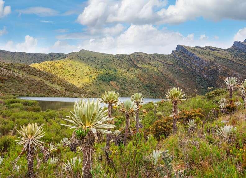 Chingaza National Park, Cundinamarca