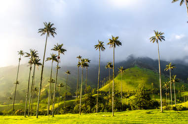 Cocora Valley, Quindio