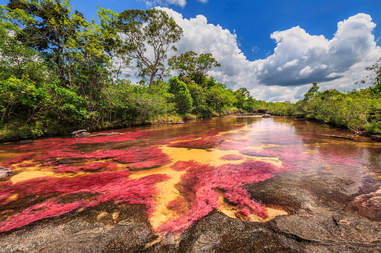 Cano Cristales (River of five colors), La Macarena