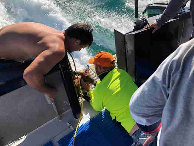 Men Pull Drowning Kangaroo From Ocean And Give Him CPR