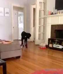 Dog finally catches his own tail in viral video
