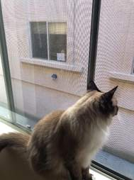 Theo the cat watches Simon through the window