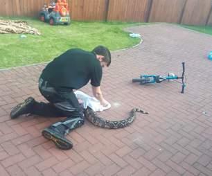 snake rescue boa scotland