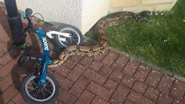 snake boa rescue