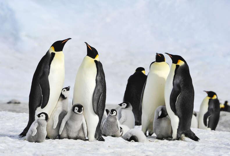 penguin death