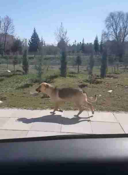 Man Sees Stray Dog Carrying Bowl Of Food And Decides To Follow Her
