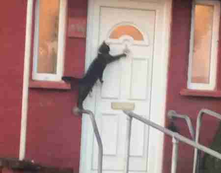 Viral Video Shows Cat Knocking On Door Like A Human