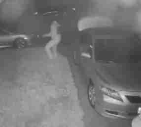 Man surprised by coyote during car break-in