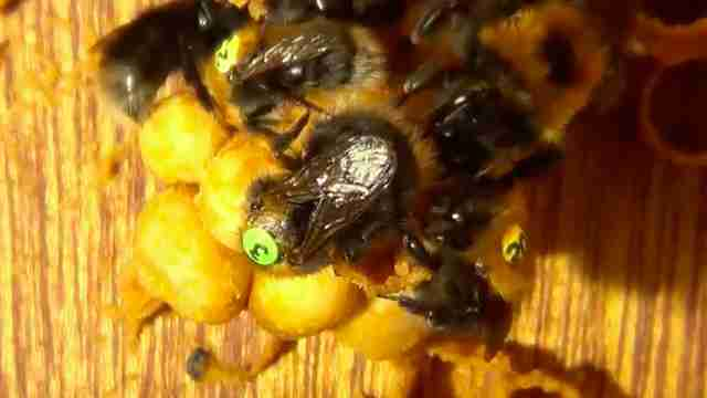Guy Catches Queen Bee On Film Telling Off One Of Her Subjects