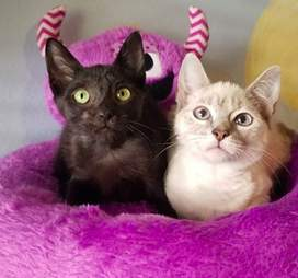 Bonded foster cats at Florida foster home