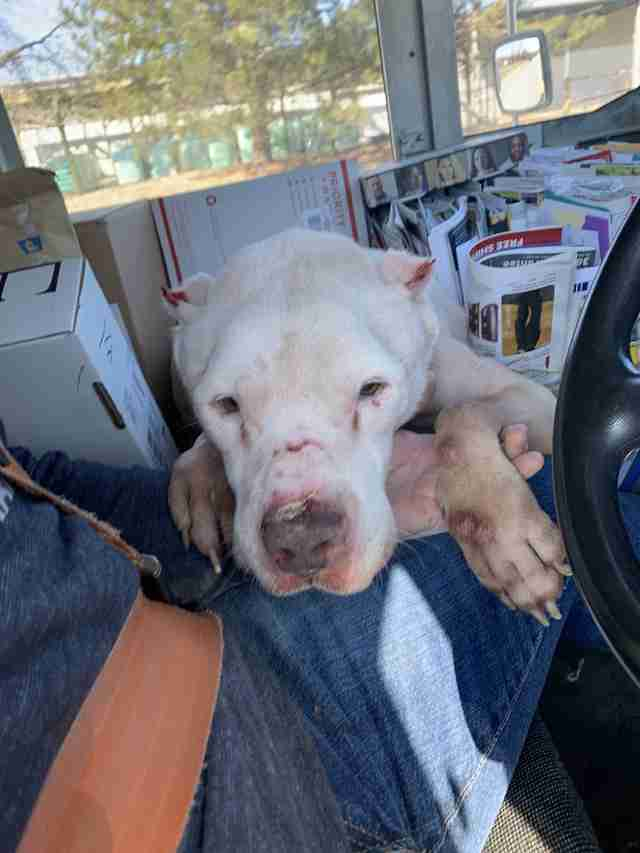 Mailman Finds Dog Collapsed On Side Of Road And Knows What He Has To Do