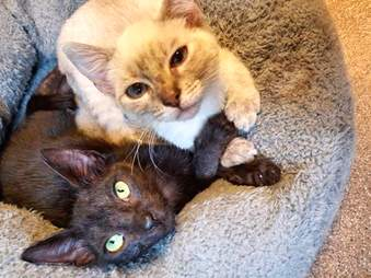 Bonded foster cats holding paws