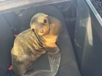 Sea lion found on US-101 freeway
