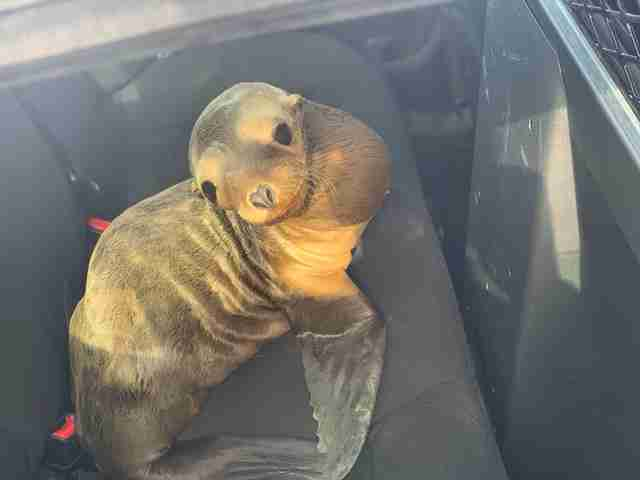 Sea lion found on US-101 freeway