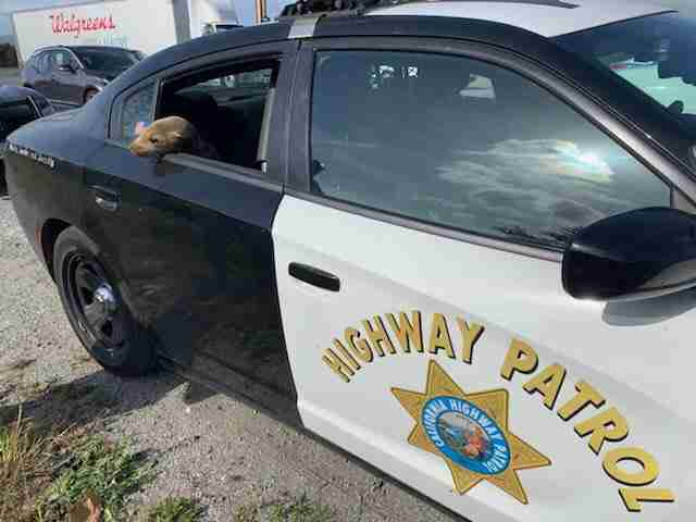 Sea lion arrested for holding up traffic