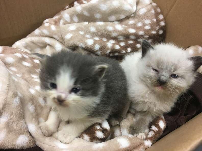 police officer cuddles kittens