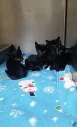 39 kittens