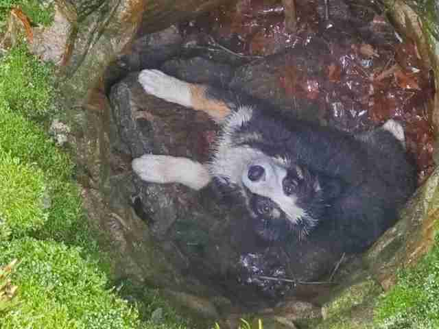 puppy falls into well