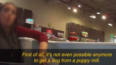 Pet shop worker telling investigator puppy mills don't exist