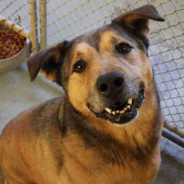 Dog Stuck In Shelter For 2,381 Days Never Gave Up Hope