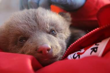 Bear cub mistaken for stray puppy in Kosovo