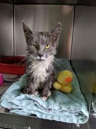 Stray kitten saved from being stuck in industrial bin in factory