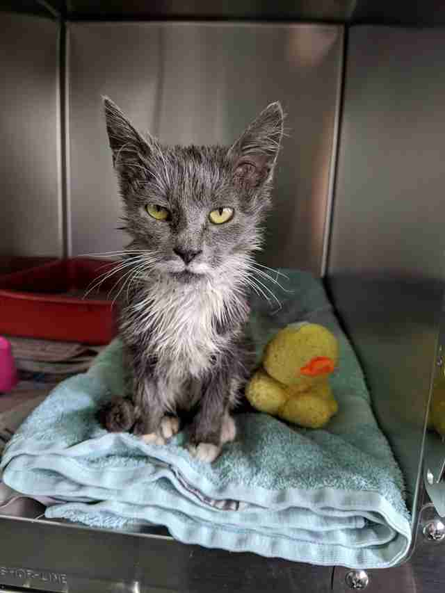 Stray kitten saved from being stuck in industrial bin in factory