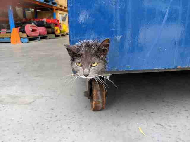 Stray kitten stuck in bin in factory