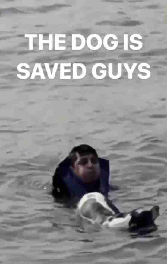 man jumps into river to save dog