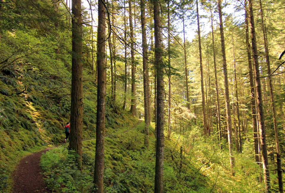 Best Hikes Near Portland: Hiking Trails and Parks Worth Checking Out