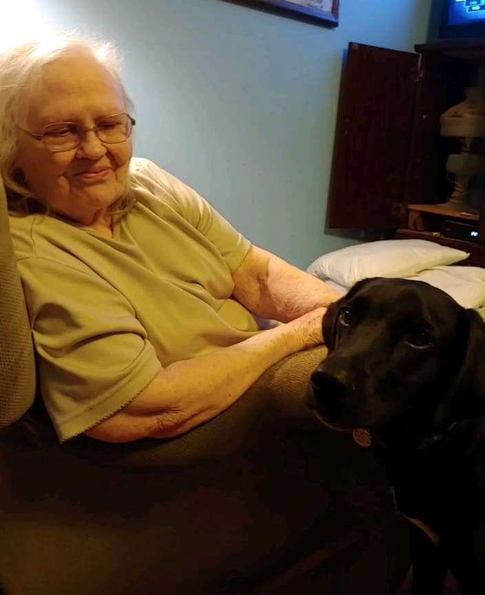 Mason the rescue dog after saving a life