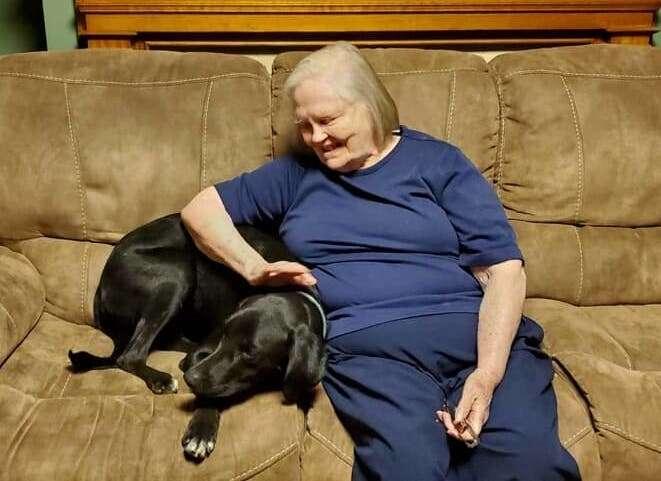 Mason the hero dog saves grandmother's life