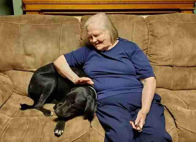 Mason the hero dog saves grandmother's life