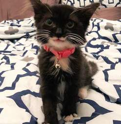 Tulip the smiling rescue kitten when she was first adopted