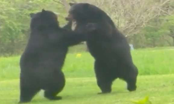 This Video of Two New Jersey Dudes Narrating a Backyard Bear Brawl Is a Masterpiece