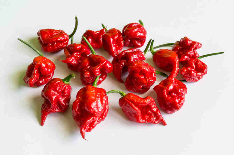 carolina reaper peppers chili chile