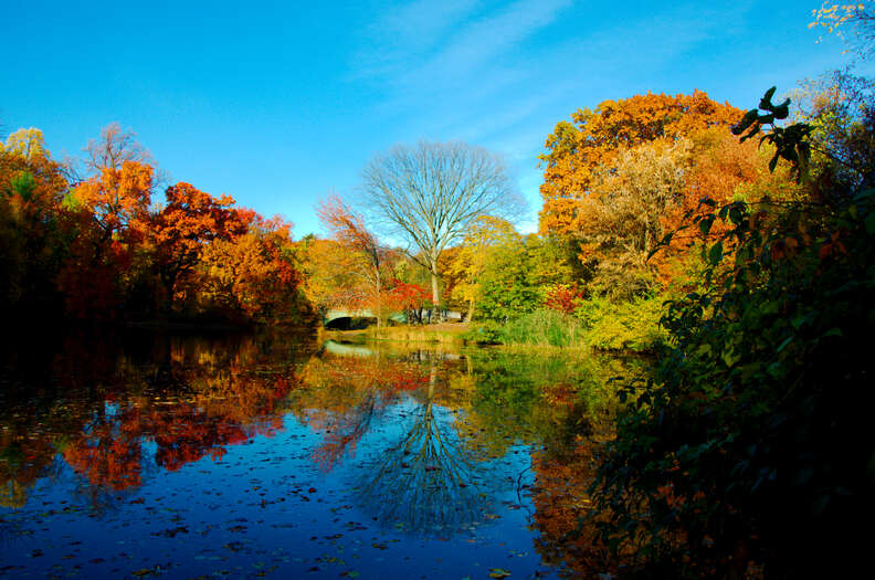 Autumn in Prospect Park