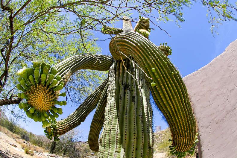 south Mountain Park, Phoenix
