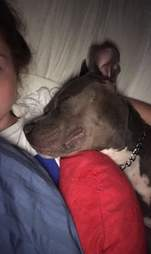 Draco the dog snuggles his heart pillow
