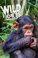 Wild Hearts cover art