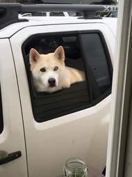 drive-through dog