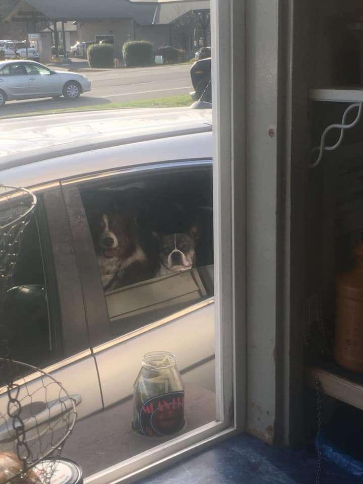 drive-through dogs