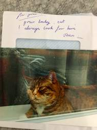 Cat who received fan mail in England