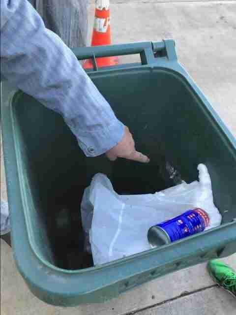 Kitten Rescued From Garbage Bin Didn't Even Look Like A Cat