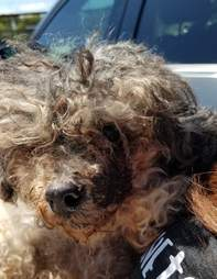 Severely matted dog dumped at shelter