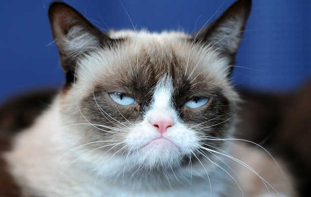 The Absolute Grumpiest Grumpy Cat Memes From Over the Years